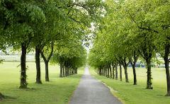 Cowan Park trees